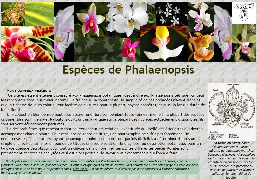 Espèces de Phalaenopsis